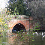 """""""Dog Walks in Cannon Hill Park by Elliott Brown licensed under CC BY 2.0"""""""