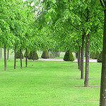 """Dog Walking in Glasgow Green by Glasgow Green_0857 licensed under CC BY-SA 2.0"""