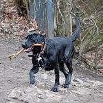 """Dog Walks in Heaton Park by Phil Long licensed under CC BY 2.0"""