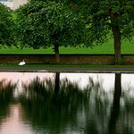 """""""Dog Walks in Inverleith Park by Jenni Douglas licensed under CC BY 2.0"""""""