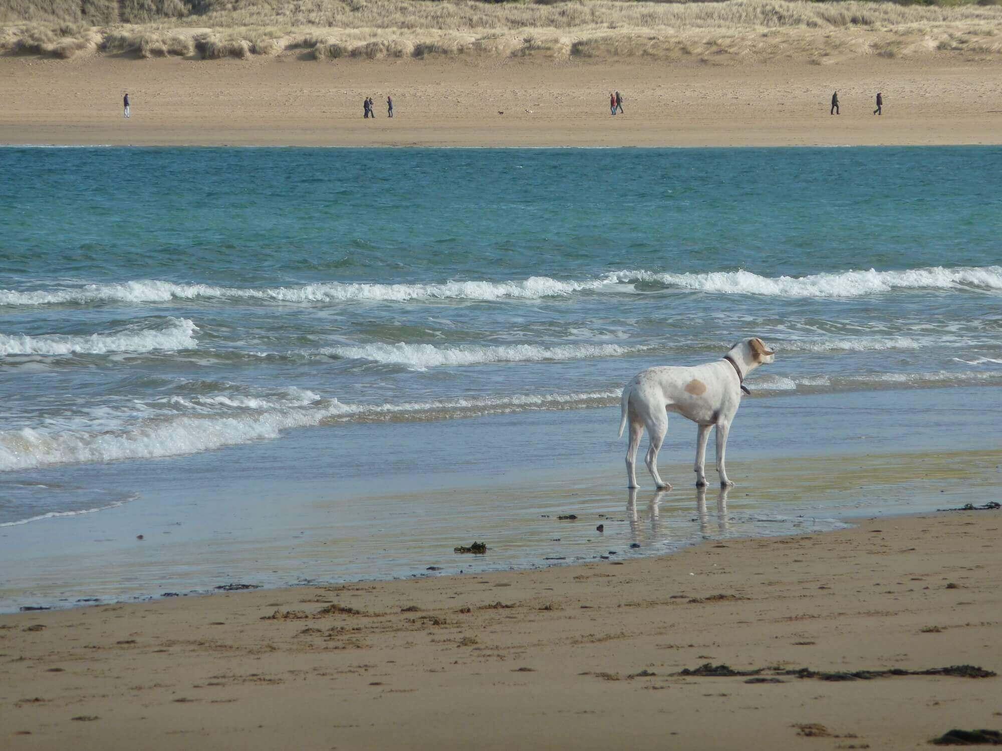 Padstow Beach, a dog friendly beach in Cornwall