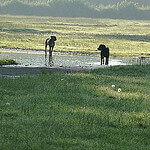 """Dog Walks in Platt Fields Park by Alex Pepperhill licensed under CC BY-ND 2.0"""