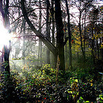 """""""Dog Walking in Pollok Country Park by Caitriana Nicholson licensed under CC BY-SA 2.0"""""""