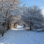 """Dog Walks in Woodgate Valley Country Park by Tony Hisgett licensed under CC BY 2.0"""