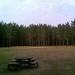 rendlesham forest, a great place to walk your dog in suffolk.