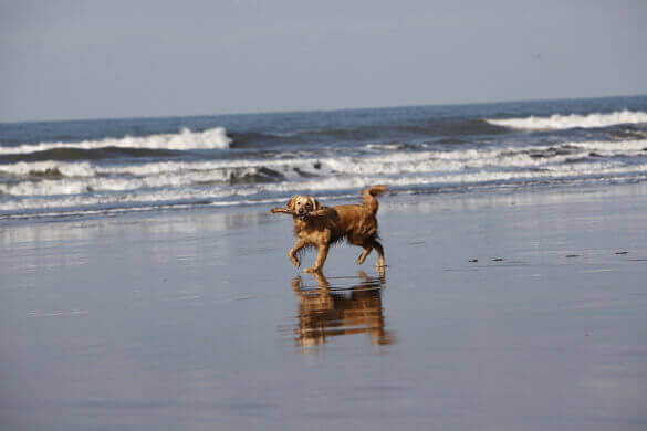Berrow Beach, a dog friendly beach in Somerset