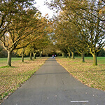 southampton common, a great place to walk your dog in southampton